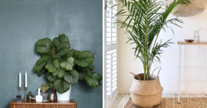 Slaapkamerplanten Slaapkamer plant
