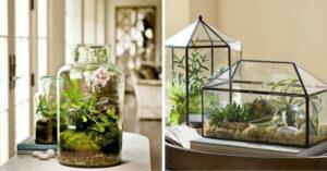 Diy mini ecosysteem in glazen fles
