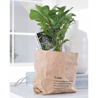 2x Theeplant in paperbag