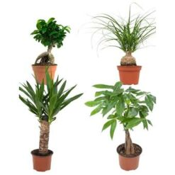 4x Tropische groene planten mix